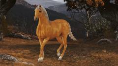 cavalo_antjie